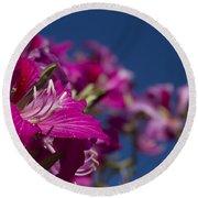 Bauhinia Purpurea - Hawaiian Orchid Tree Round Beach Towel