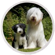 Bearded Collie And Puppy Round Beach Towel