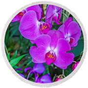 Beautiful Purple Orchid - Phalaenopsis Round Beach Towel