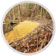 Beaver Dam In Fall Colored Forest Wetland Swamp Round Beach Towel