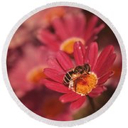 Bee On A Pink Daisy Round Beach Towel