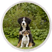 Bernese Mountain & Jack Russell Puppies Round Beach Towel