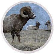 Big Horn Sheep 2 Round Beach Towel