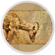 Bighorn Sheep Round Beach Towel