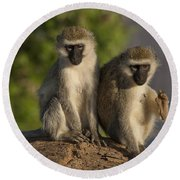 Black-faced Vervet Monkey Round Beach Towel