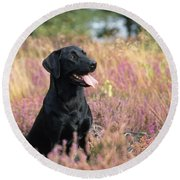 Black Labrador Dog Round Beach Towel