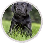 Black Labrador Puppy Round Beach Towel