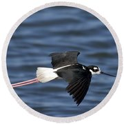 Black-necked Stilt Round Beach Towel