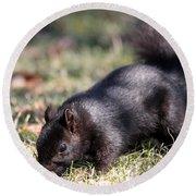 Black Squirrel Round Beach Towel