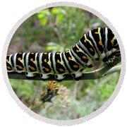 Black Swallowtail Caterpillar Round Beach Towel