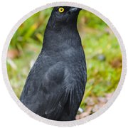 Black Tasmanian Crow Standing In Green Forest Round Beach Towel