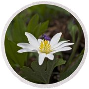Bloodroot Wildflower - Sanguinaria Canadensis Round Beach Towel