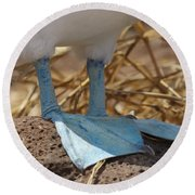 Blue Footed Boobie Galapagos Round Beach Towel