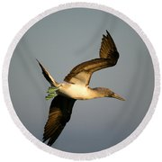 Blue-footed Booby, Sula Nebouxii, Santa Round Beach Towel