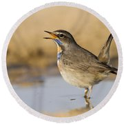 Bluethroat Luscinia Svecica Round Beach Towel