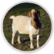 Boer Goat  Round Beach Towel