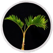Bonsai Palm Tree Round Beach Towel