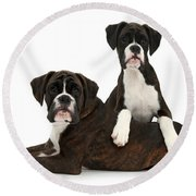 Boxer Pups Round Beach Towel by Mark Taylor