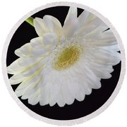 Bright White Gerber Daisy # 2 Round Beach Towel