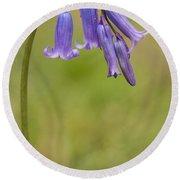 British Bluebell Hyacinthoides Non Scripta Round Beach Towel