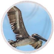 Brown Pelican Round Beach Towel