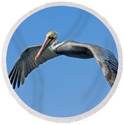 Brown Pelican In Flight Round Beach Towel