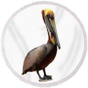 Brown Pelican-7 Round Beach Towel