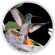Buff-bellied Hummingbird At Nest Round Beach Towel