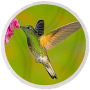 Buff-tailed Coronet Hummingbird Round Beach Towel