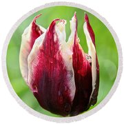 Candy Tulip Round Beach Towel