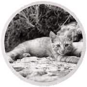Cat And Lavender  Round Beach Towel