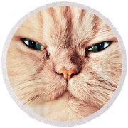 Cat Face Close Up Portrait Round Beach Towel