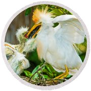 Cattle Egret With Young In Nest Round Beach Towel
