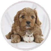 Cavapoo Puppy And Roborovski Hamster Round Beach Towel