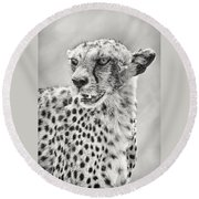 Cheetah Round Beach Towel by Adam Romanowicz