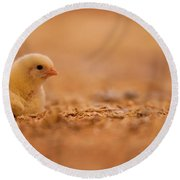 Chick In Poultry Barn Round Beach Towel
