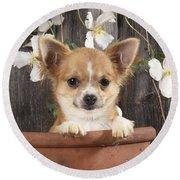 Chihuahua Dog In Flowerpot Round Beach Towel
