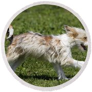 Chinese Crested Dog Round Beach Towel