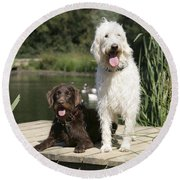 Chocolate And Cream Labradoodles Round Beach Towel