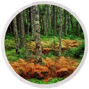 Cinnamon Ferns And Red Spruce Trees Round Beach Towel
