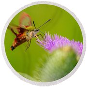 Clearwing Hummingbird Moth Round Beach Towel