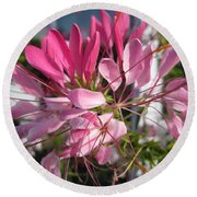Cleome Named Cherry Queen Round Beach Towel