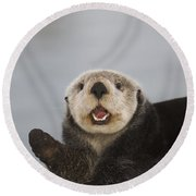 Close Up A Sea Otter In Prince William Round Beach Towel