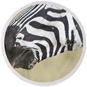 Close-up Of A Burchells Zebra Equus Round Beach Towel