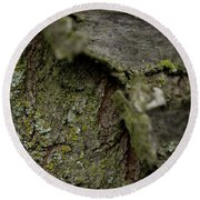 Closeup Of Bark Covered In Lichen Round Beach Towel
