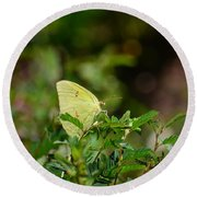 Clouded Sulphur Butterfly Round Beach Towel