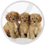 Cockapoo Puppy Dogs Round Beach Towel