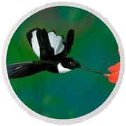 Collared Inca Hummngbird Round Beach Towel