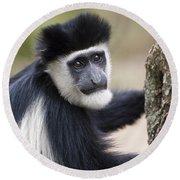 Colobus Monkey Round Beach Towel