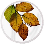 Colorful Leaves Isolated On A White Background Round Beach Towel